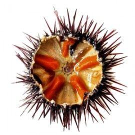Corail d'Oursinflash pasteurisé - 50 g